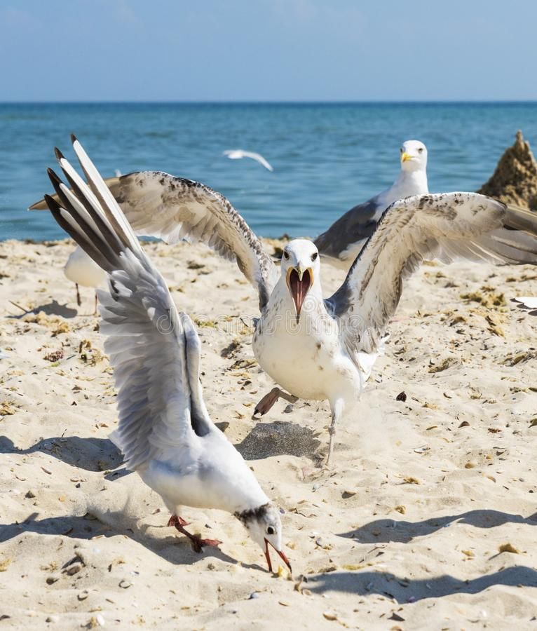 Flock of white gulls flies on the Black Sea shore on a summer d. Ay, the village of Iron Port, Ukraine, close up stock photo