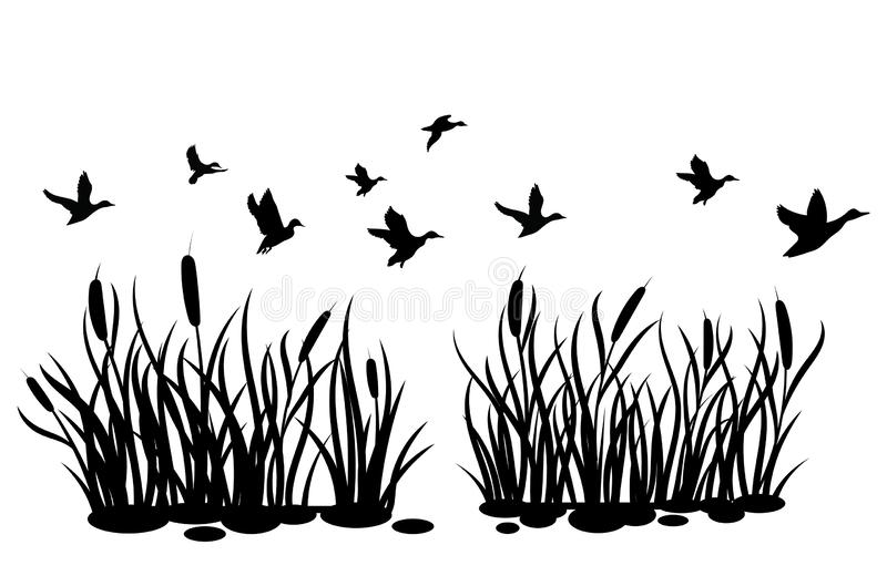 A flock of wild ducks flying over a pond with reeds. Black and white illustration of ducks flying over the river. Vector stock illustration