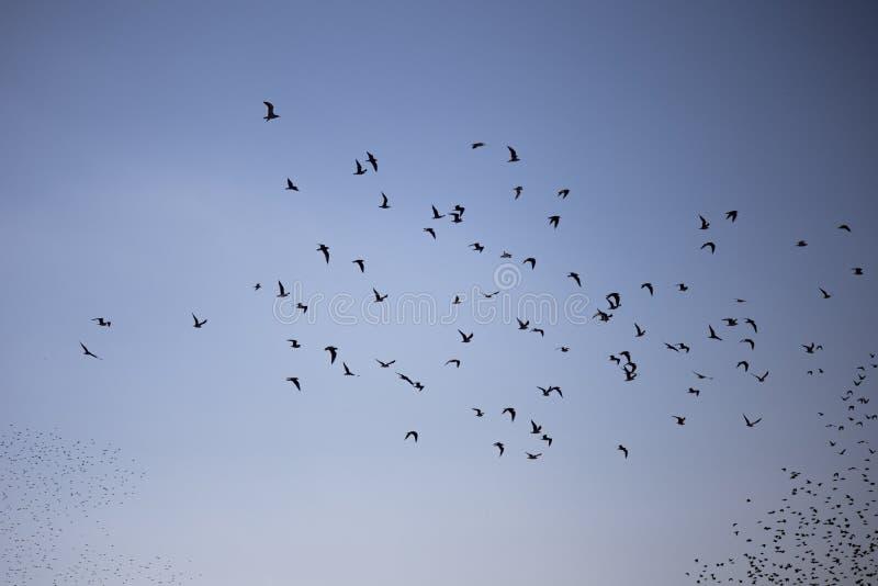 Flockas för fåglar royaltyfri fotografi