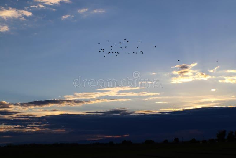 Flocken av fåglar som högt flyger ovanför mörkt clous maskera horisonten som solnedgången, bleknar royaltyfri bild