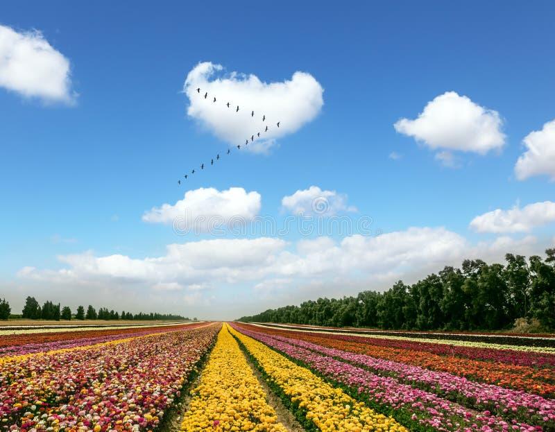 Flocken av flyttfåglar arkivbilder