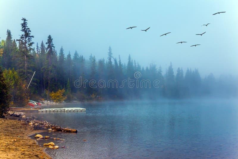 Flocken av flyttfåglar flyger över sjön royaltyfri fotografi