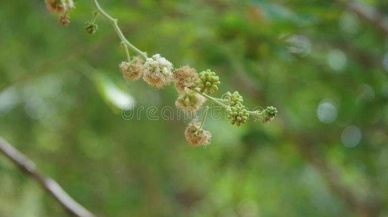 Flockiger flockiger grüner Hintergrund der Blume stockbilder