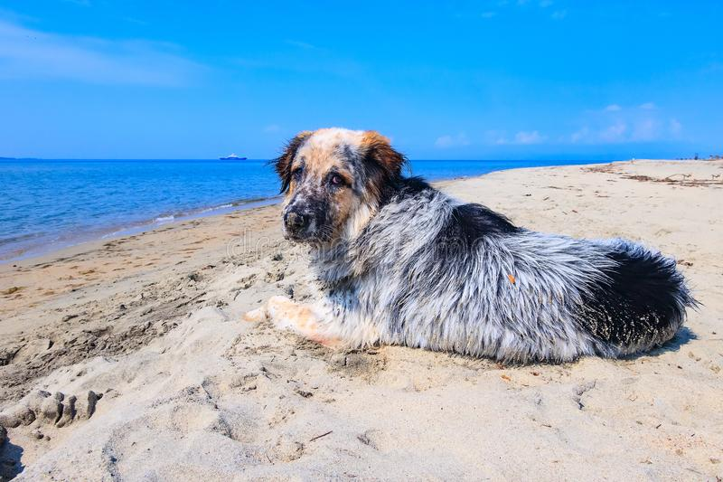 Flockiger Hund am Strand stockbilder