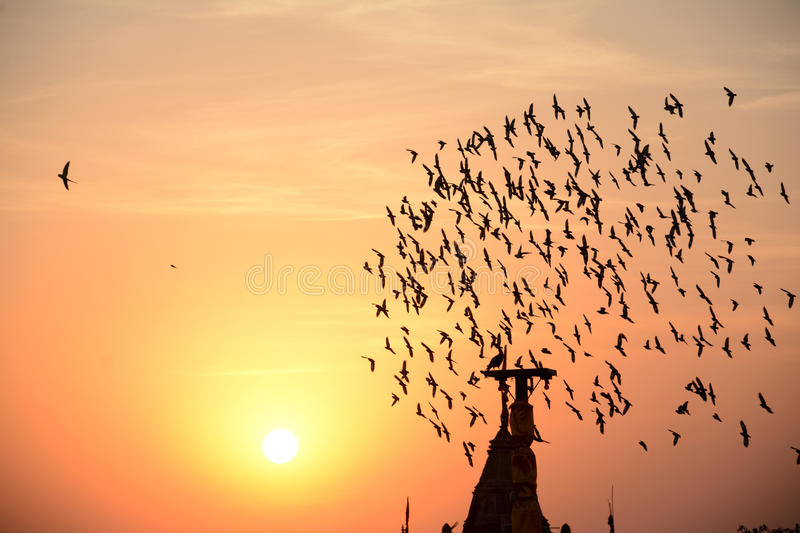 Flocking behavior of birds in evening. FLOCKING BEHAVIOR IN BIRDS Flocking behavior is the behavior exhibited when a group of birds, called a flock, are foraging royalty free stock images