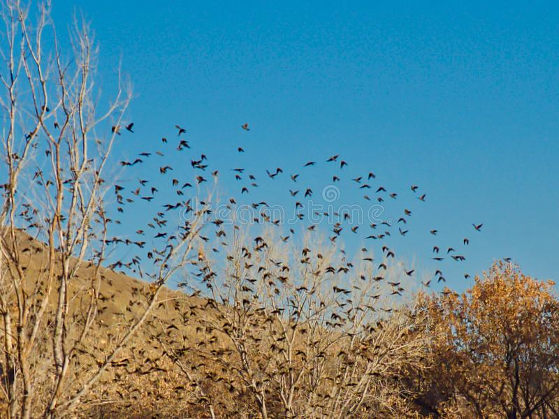 Flocking Birds in November stock photography