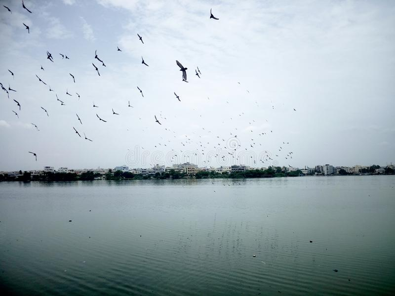 Flocking birds over a Lake. Flocking birds over a Lake gave a fabulous view to the pic royalty free stock image