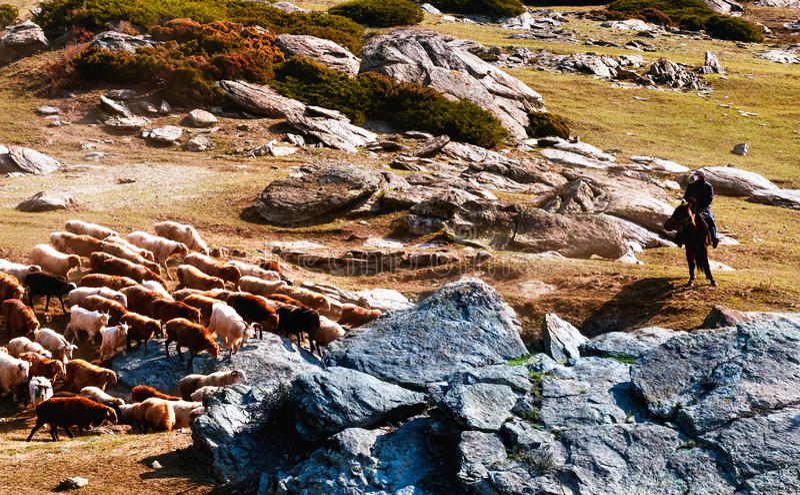 Flocks of change garments according to the migration. Goat herdsmen on horseback royalty free stock photos