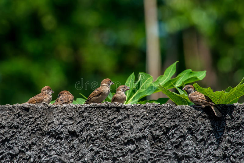 Sparrows perched on a wall stock photo image of gourd 97899588 download sparrows perched on a wall stock photo image of gourd 97899588 thecheapjerseys Gallery