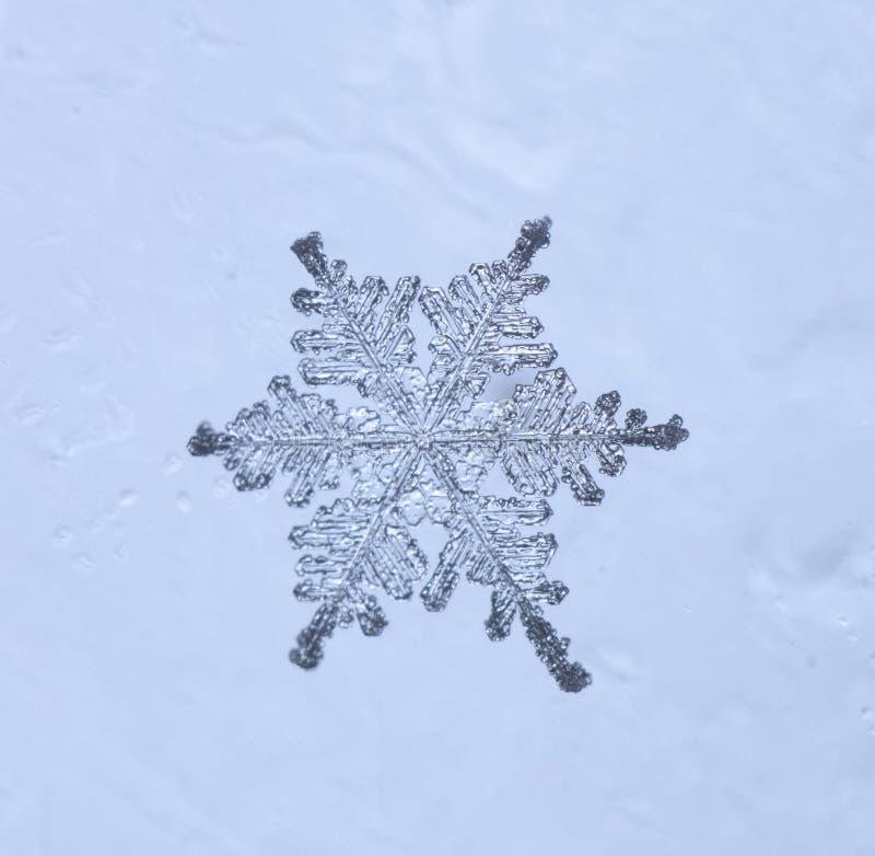 Floco bonito da neve em um claro - fim azul do fundo acima fotografia de stock royalty free