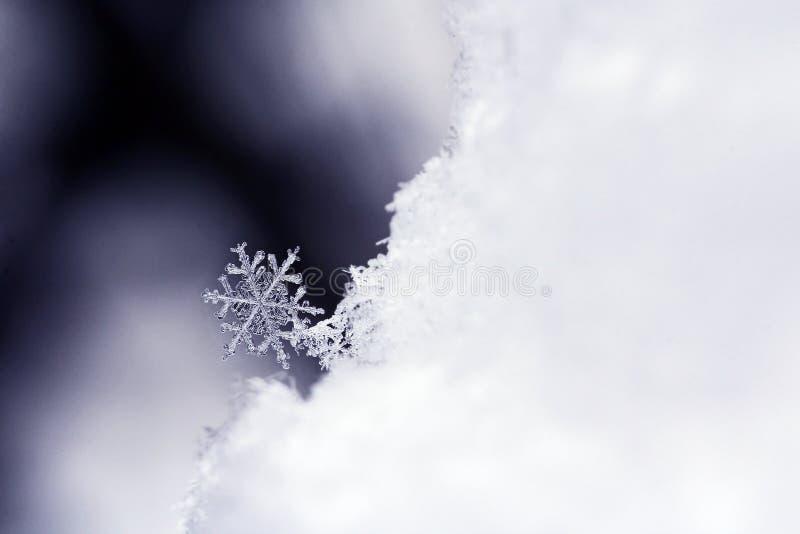 Floco de neve fotografia de stock royalty free