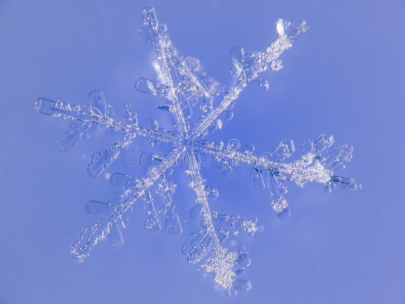 Floco de neve com fundo azul fotografia de stock royalty free