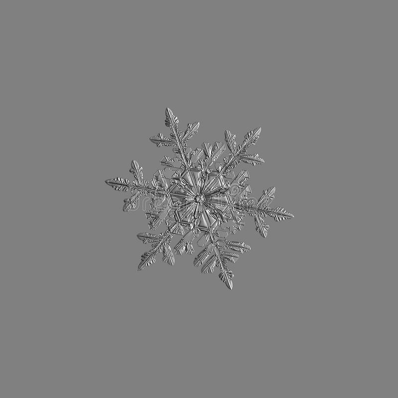 Floco de neve isolado no fundo cinzento uniforme fotografia de stock royalty free