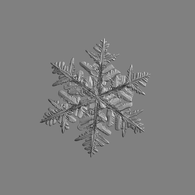 Floco de neve isolado no fundo cinzento uniforme fotografia de stock