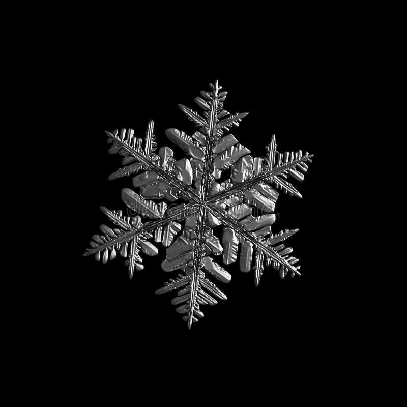 Floco de neve isolado no fundo preto foto de stock