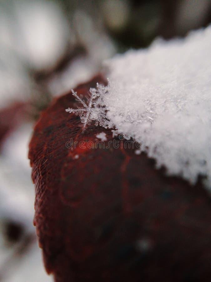 Flocon de neige complexe photos libres de droits