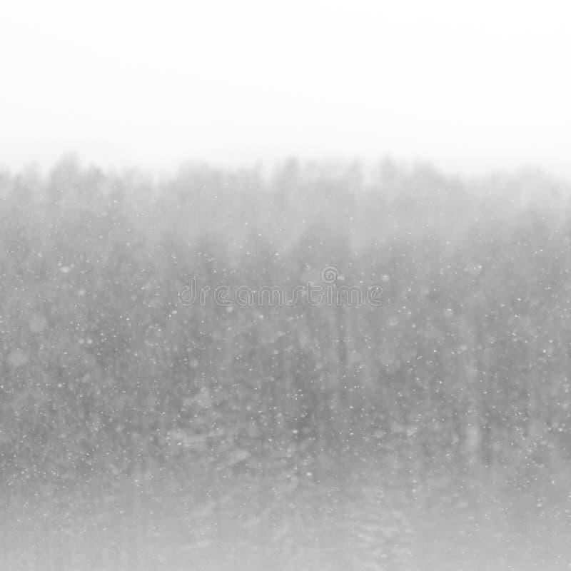 Flocons de neige dessus sur un fond indistinct d'une forêt d'hiver photographie stock libre de droits