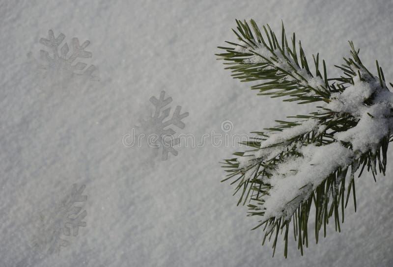 Flocons de neige et branches de sapin sur la neige blanche images libres de droits