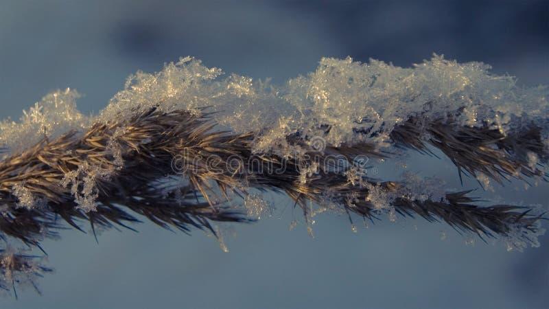 Flocons de neige sur l'herbe au coucher du soleil un après-midi d'hiver photos stock