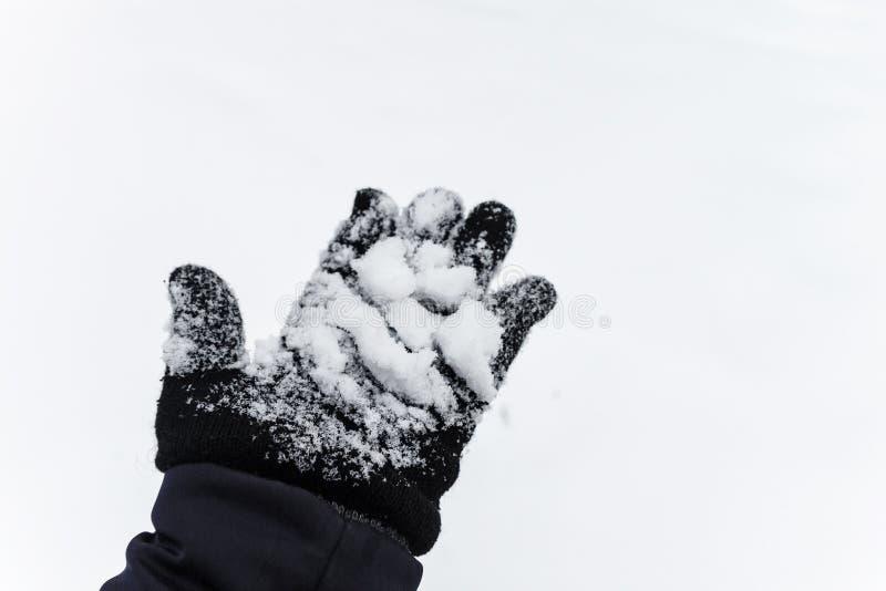 Flocons de neige de vol La neige de soufflement en hiver givré se garent le jour ensoleillé image libre de droits