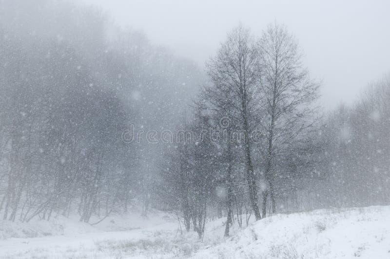 Flocos da neve que caem sobre a paisagem no inverno imagem de stock royalty free