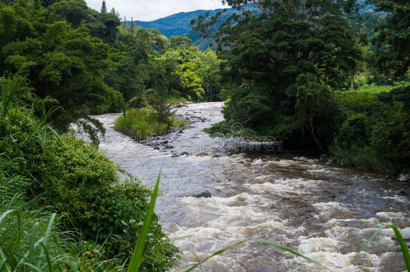 Flod bland det mest forrest med träd arkivfoto