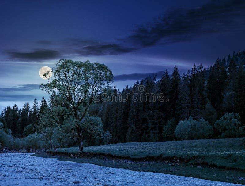 Flod bland skogen på natten royaltyfri fotografi