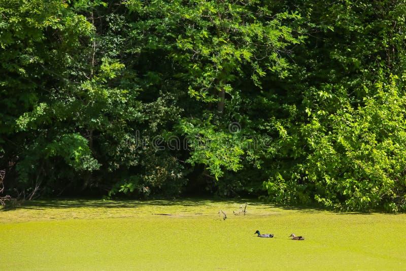 Flod Bosut i Vinkovci royaltyfria bilder