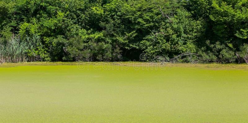 Flod Bosut i Vinkovci arkivfoton