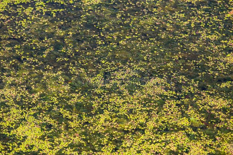 Flod Bosut i Vinkovci royaltyfri fotografi