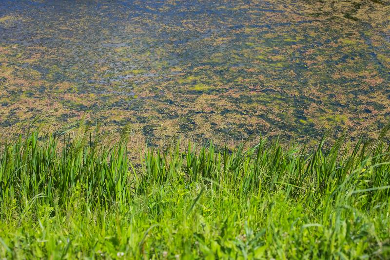 Flod Bosut i Vinkovci arkivbilder