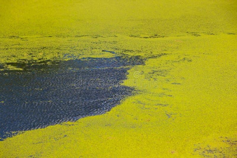 Flod Bosut i Vinkovci royaltyfria foton