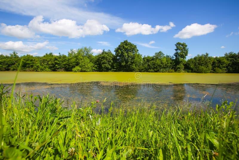 Flod Bosut i Vinkovci fotografering för bildbyråer