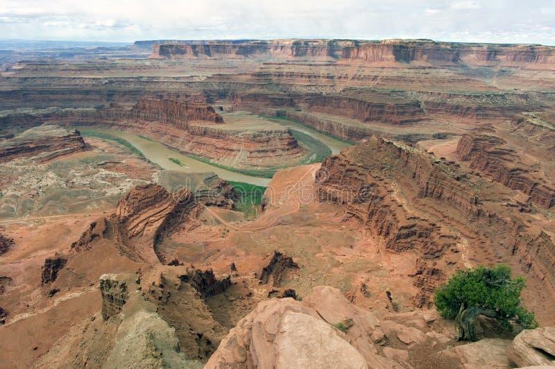 flod för canyonlandscolorado nationalpark arkivfoto