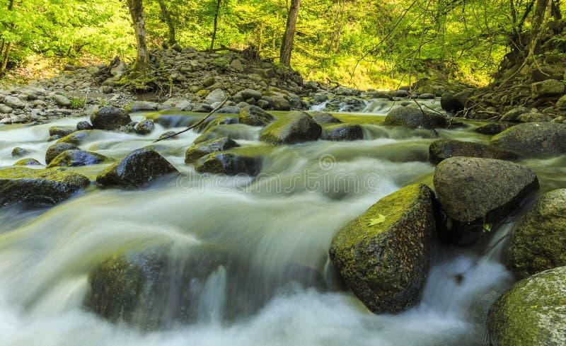 Flod i den Hirkan nationalparken i Lankaran Azerbajdzjan arkivfoton