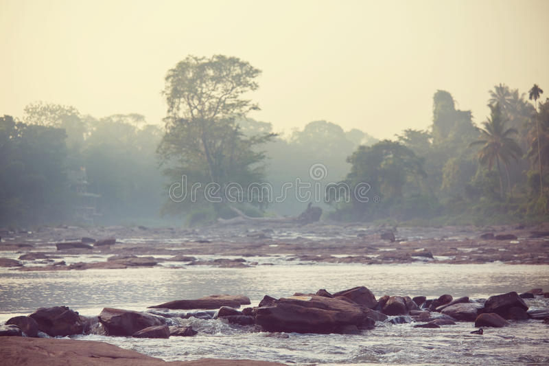 Flod i djungel arkivbilder