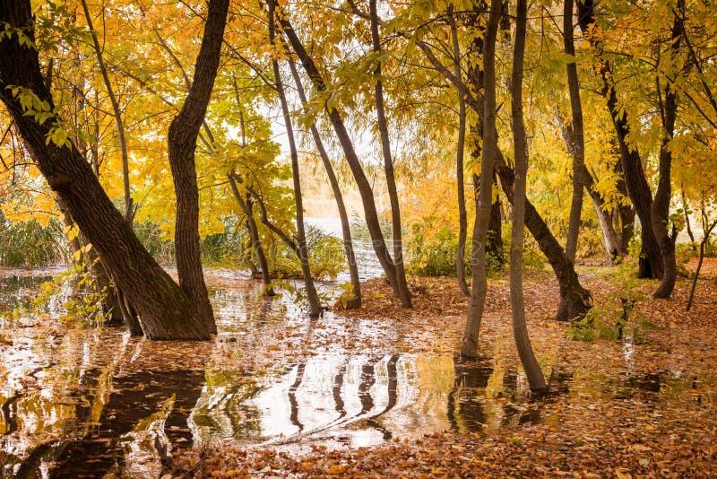 Flod i höstskogen arkivbild