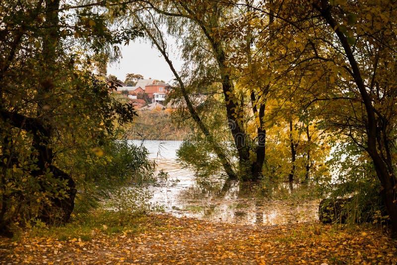 Flod i höstskogen arkivbilder