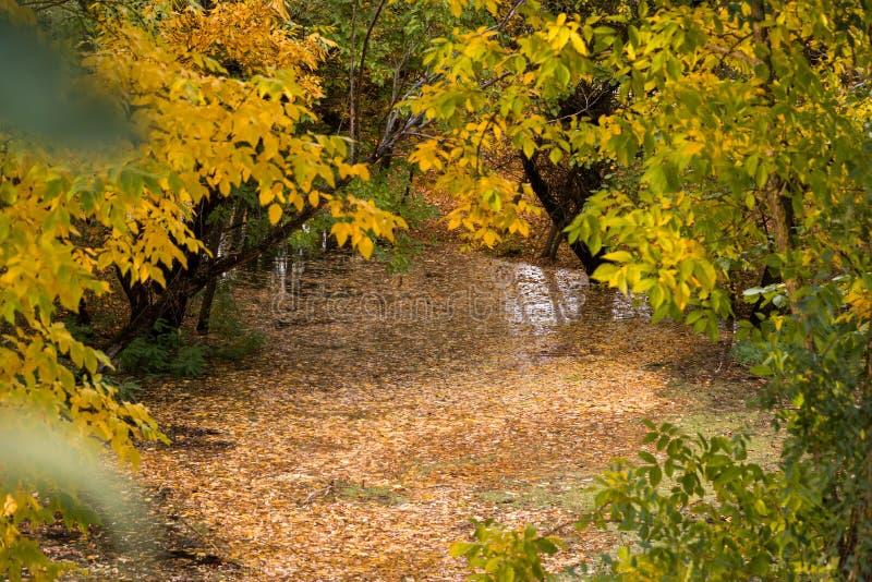 Flod i höstskogen fotografering för bildbyråer