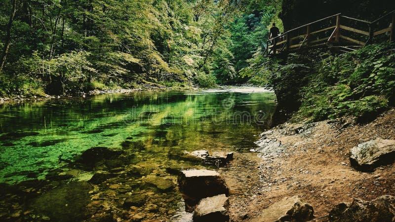 Flod i nationalparken arkivfoton