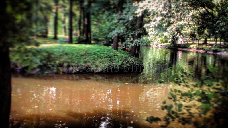 Flod i parkera arkivfoto