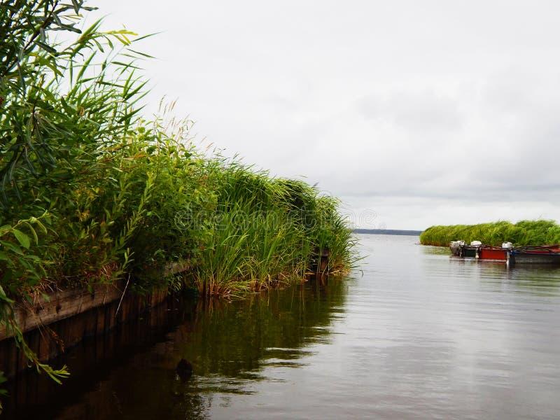 Flod i parkera i Vitryssland arkivfoton