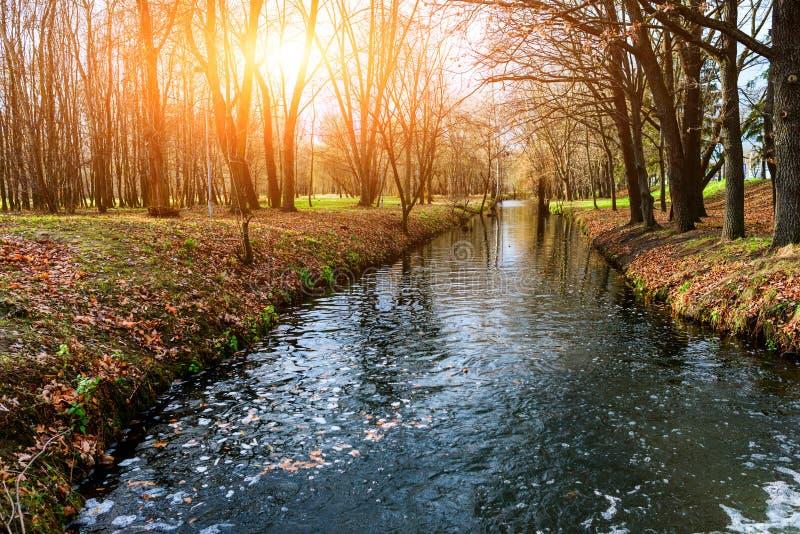 Flod i parkerautsikten royaltyfria bilder
