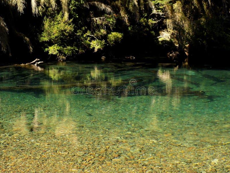 Flod i Patagonia arkivfoto