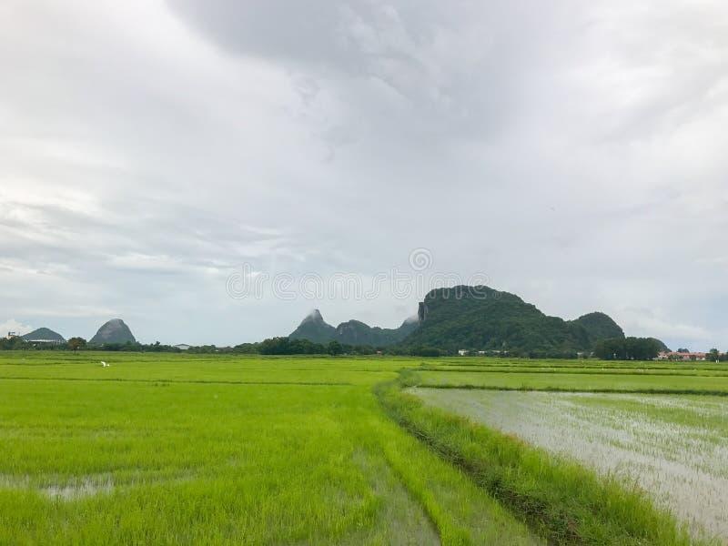 Flod i risfält och berg på Thailand arkivbild