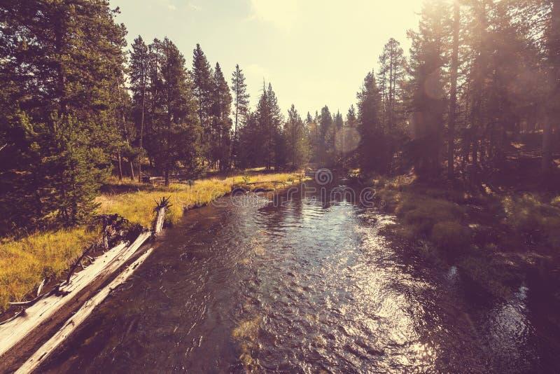Flod i skog fotografering för bildbyråer