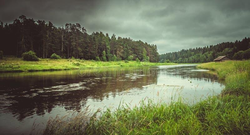 Flod i skogen efter regn arkivfoto