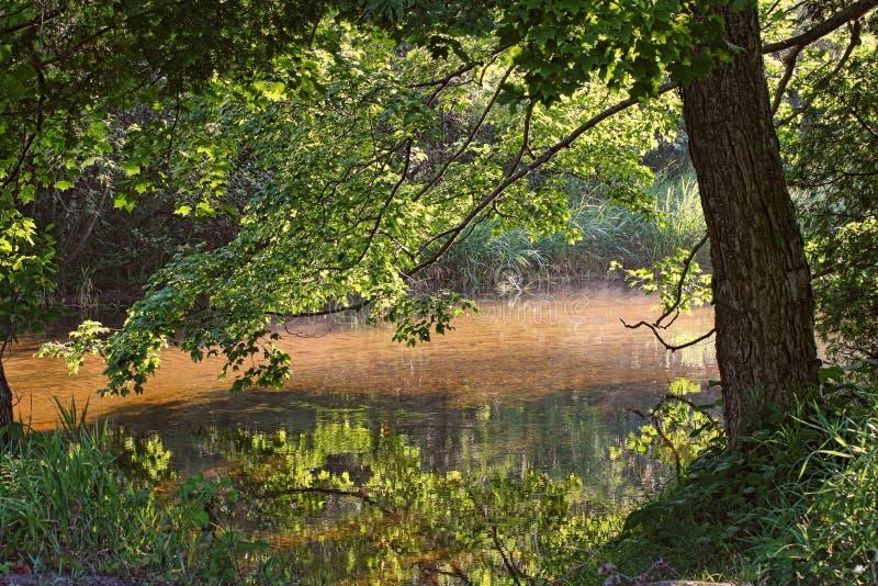 Flod i sommar arkivfoto