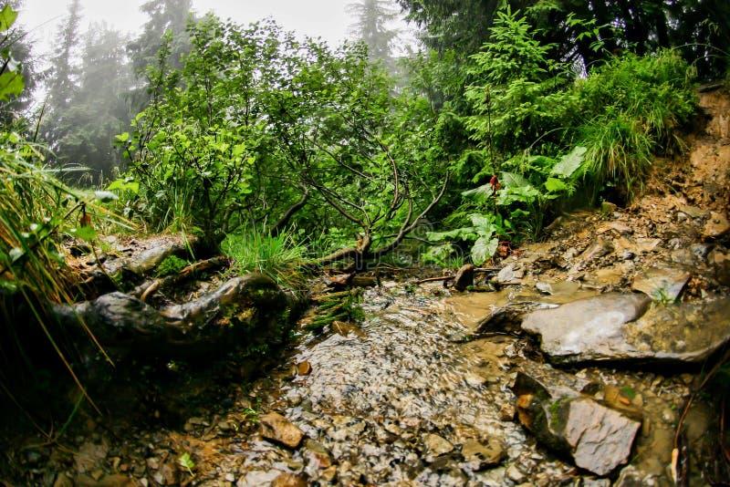 Flod i sommarskog arkivbild