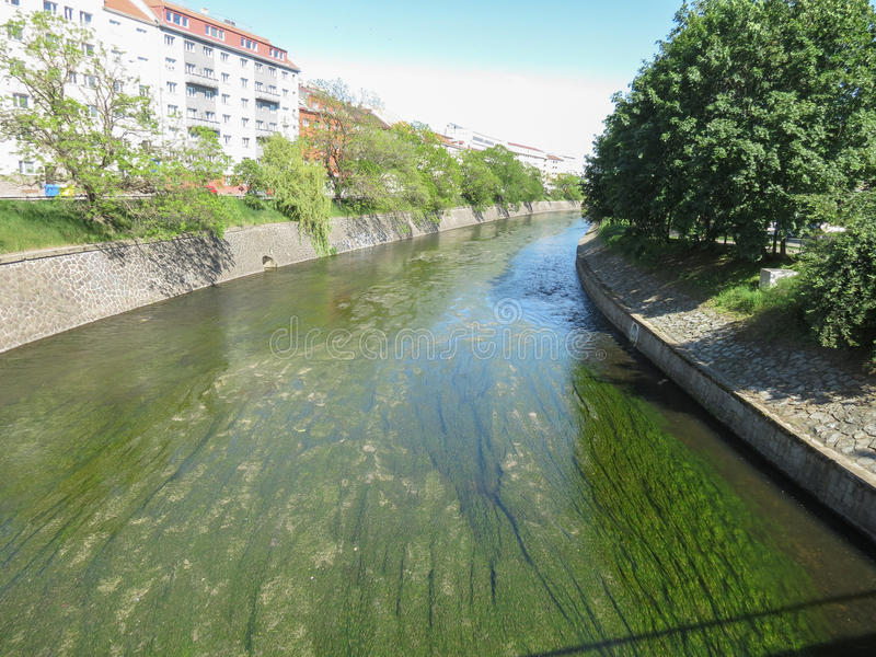 Flod med alger royaltyfri foto